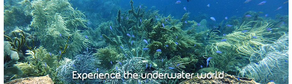 experience the underwater world